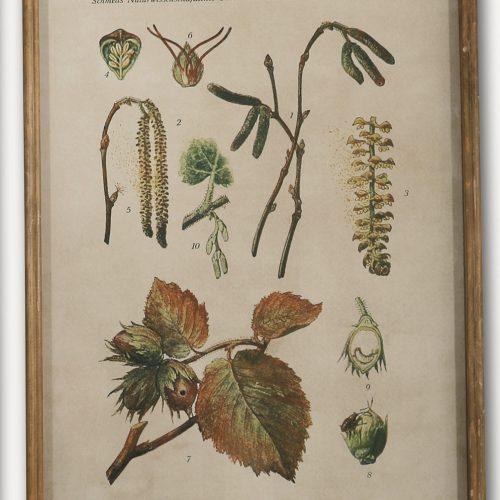 Botanical Hazel Print