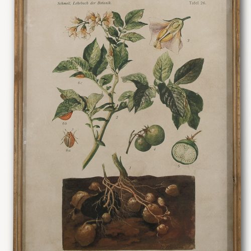 Botanical Vegetable Print