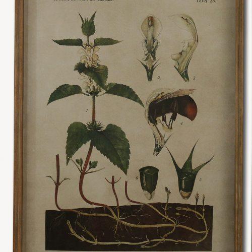 Botanical Nettle Print